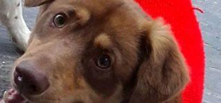 """Teo """"Un cachorrón que no llega al año de edad. Deambula todo el día en busca de comida, cariño y un lugar para resguardarse del frío y la lluvia. Es sumamente cariñoso y le gusta jugar con otros perritos. Teo necesita una familia que lo cuide y quiera como merece. Es tamaño medianito. Por favor… […]"""