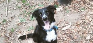 "Duke Duke ""Duke en adopción responsable!!! Luego de su castración, este cachorrón cruza de Border Collie va a estar listo para recibir todos los mimos de una familia!! Si lo querés conocer comunicate al 0336-154004916""."