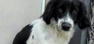 """Cachorro """"Este cachorro de 7 meses tamaño chiquito busca un hogar. Es muy cariñoso, buenito, juguetón y no pesa más de 10 kilos. Así va a quedar, súper chiquito!! Fue abandonado y por suerte está resguardado. Es urgente por favor, se entrega vacunado. Si querés conocerlo no dudes en comunicarte al 03400-15445794. Muchas gracias""""."""