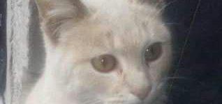 """Gatita """"Hermosa gatita de unos 5 meses de edad busca hogar que le den mucho amor. Si te interesa conocerla, comunicate al 03400-15519386. Desde ya, muchas gracias""""."""
