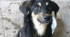 """Yira """"Yira fue abandonada al final de calle Eva Perón en el medio del campo junto a otra cachorrita. Estaban en un estado de abandono terrible. Yira estaba pelada por la sarna, llena de parásitos y mucha hambre. Con el tiempo fue recuperando su pelaje y sus ganas de vivir. Budín (foto de la derecha) […]"""