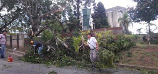 La tormenta eléctrica afectó el sistema informático y la central telefónica del Municipio. Además, el viento derribó tres árboles en distintos sectores.